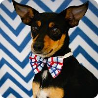 Adopt A Pet :: Kelso - Princeton, KY