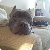 Adopt A Pet :: Hallie - Kimberton, PA