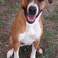Adopt A Pet :: Lola - Orland, CA