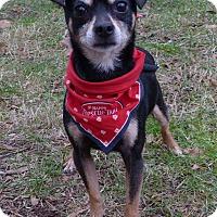 Adopt A Pet :: Reese - Mocksville, NC