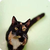 Adopt A Pet :: Hello - Gadsden, AL