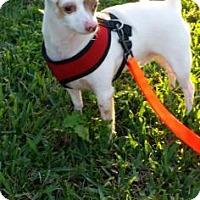 Adopt A Pet :: Toby - Loxahatchee, FL