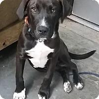 Adopt A Pet :: Hamilton - Avon, NY