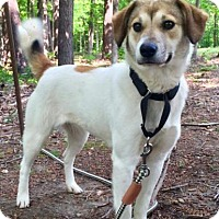 Adopt A Pet :: Sadie - Allentown, PA