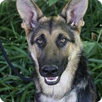 Adopt A Pet :: RYAN - Red Bluff, CA