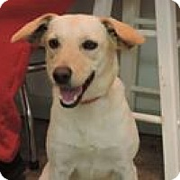 Adopt A Pet :: Missy - Cottonport, LA