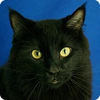 Adopt A Pet :: Jynx - Pagosa Springs, CO