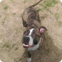 Adopt A Pet :: Gabriel - University Park, IL