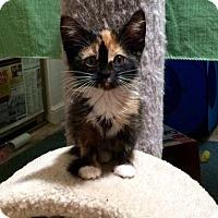 Adopt A Pet :: LaVerne - Alamo, CA