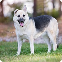 German Shepherd Dog Dog for adoption in Charlotte, North Carolina - Lucy