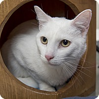 Adopt A Pet :: Lucky - Wilmington, DE