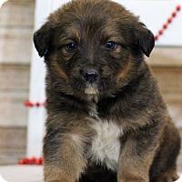 Adopt A Pet :: Donner - Waldorf, MD