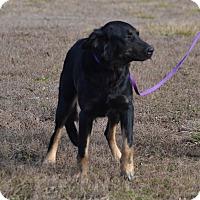 Adopt A Pet :: Kyah - Lebanon, MO