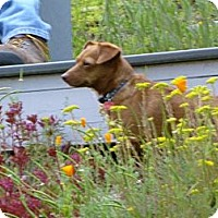 Adopt A Pet :: Molly Adopted - Nine Mile Falls, WA