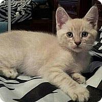 Adopt A Pet :: HarPurr - Irvine, CA