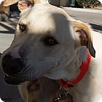 Adopt A Pet :: Trooper - Mission Viejo, CA