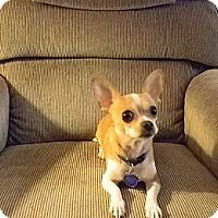 Adopt A Pet :: Jasper - Duluth, GA