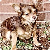 Adopt A Pet :: Reese - Bridgeton, MO