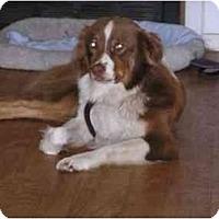 Adopt A Pet :: Ruby - Orlando, FL