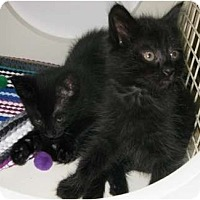 Adopt A Pet :: Bart and Lisa - Dallas, TX