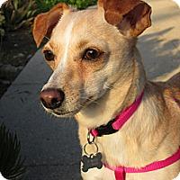 Adopt A Pet :: Jasmine - Studio City, CA