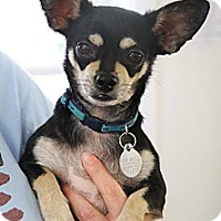 Adopt A Pet :: Chico - Knoxville, TN
