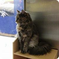 Adopt A Pet :: Zoe - Albany, NY