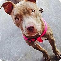 Adopt A Pet :: Violet - Huntington Beach, CA