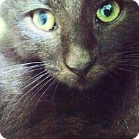 Adopt A Pet :: Tia - Colmar, PA