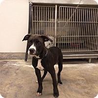 Adopt A Pet :: PEPPER - Upper Sandusky, OH