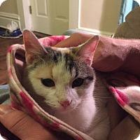 Calico Cat for adoption in Huntley, Illinois - Vivian