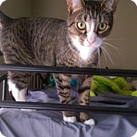 Adopt A Pet :: Dexter - North Brunswick, NJ