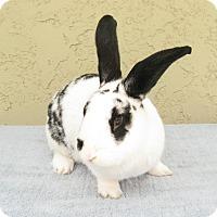 Adopt A Pet :: Oreo - Bonita, CA