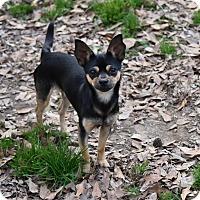 Adopt A Pet :: Rufus - Groton, MA