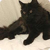 Adopt A Pet :: Smokey-Joe - Arlington, VA
