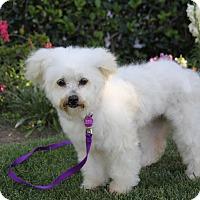 Adopt A Pet :: FLORENCE - Newport Beach, CA