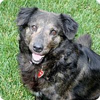 Adopt A Pet :: Natalie - Yorba Linda, CA