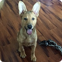 Adopt A Pet :: Static - Pompton lakes, NJ