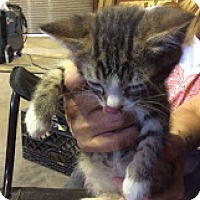 Adopt A Pet :: Tabitha - Grand Junction, CO