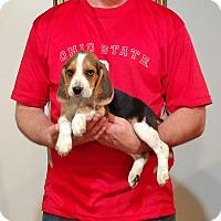 Adopt A Pet :: Champ - Gahanna, OH