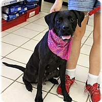 Adopt A Pet :: Lydia - Welland, ON