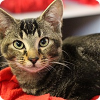 Adopt A Pet :: Mouse - Sarasota, FL