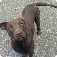 Adopt A Pet :: Lua - Union City, TN