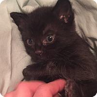 Adopt A Pet :: Mo - Saint Clair, MO