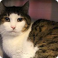 Adopt A Pet :: Ziggy - Sarasota, FL