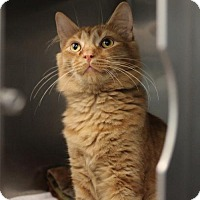Adopt A Pet :: Julius 31883640 - Westampton, NJ
