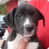 Adopt A Pet :: Emmet - Reeds Spring, MO
