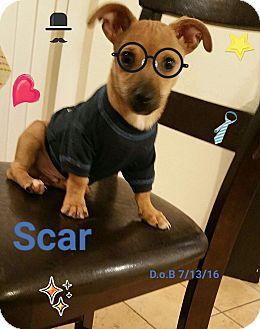 Pug/Dachshund Mix Puppy for adoption in LAKEWOOD, California - Scar