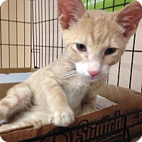 Adopt A Pet :: Butterfinger - East Brunswick, NJ