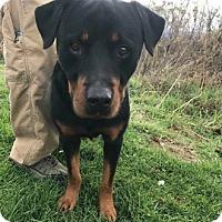Adopt A Pet :: Smokey - Lewisburg, WV